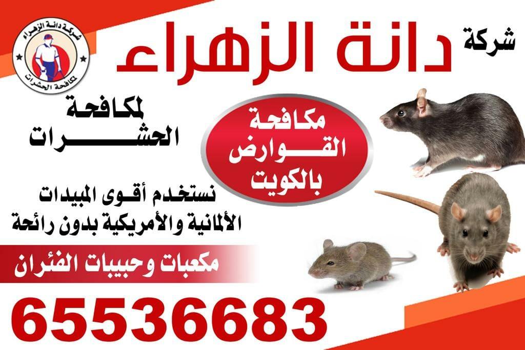 مكافحة القوارض 65536683 بالكويت