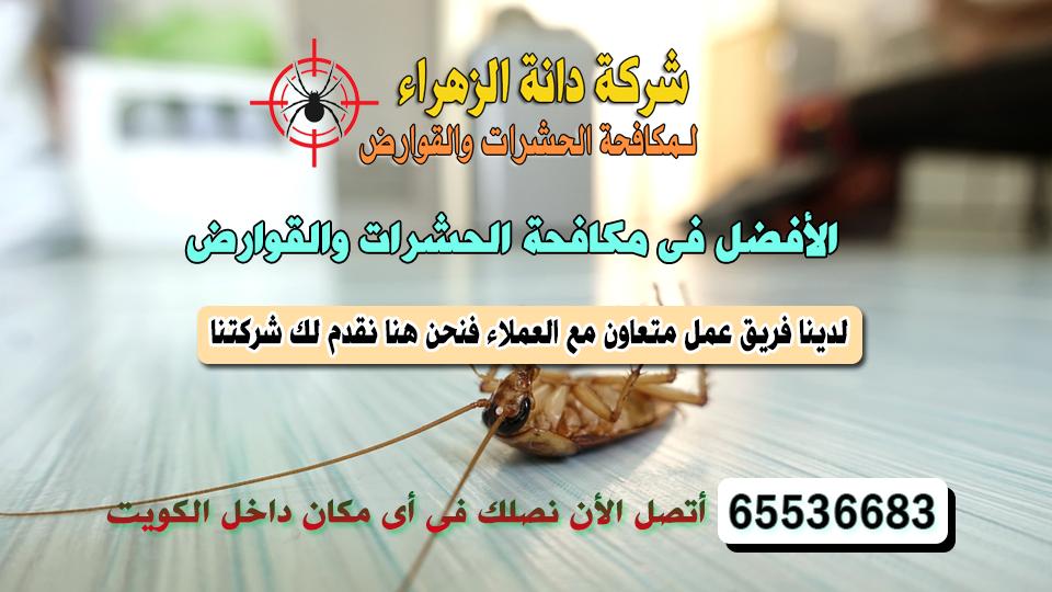 أفضل شركة مكافحة حشرات الشعب 65536683