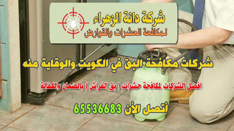 شركات مكافحة البق في الكويت والوقاية منه