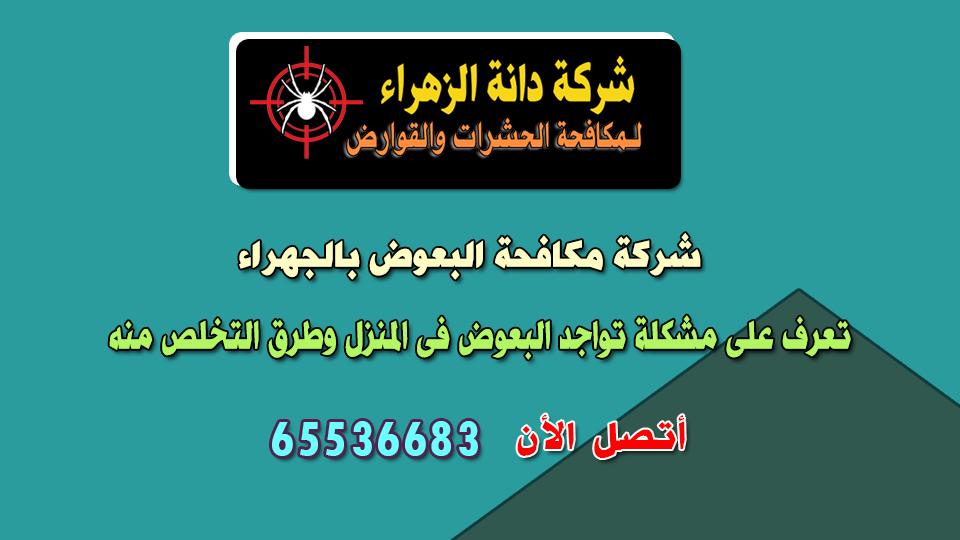 شركة مكافحة البعوض بالجهراء بالكويت
