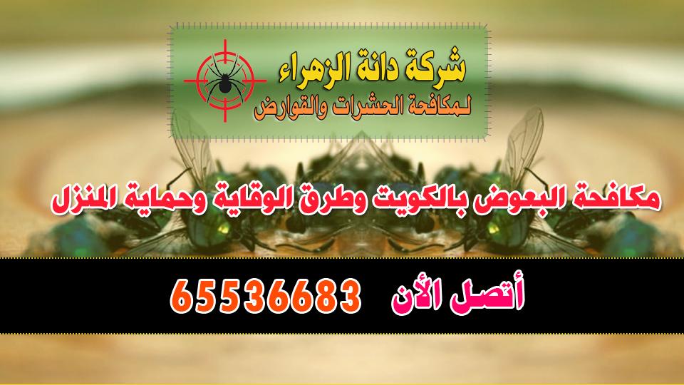 مكافحة البعوض بالكويت وطرق الوقاية وحماية المنزل