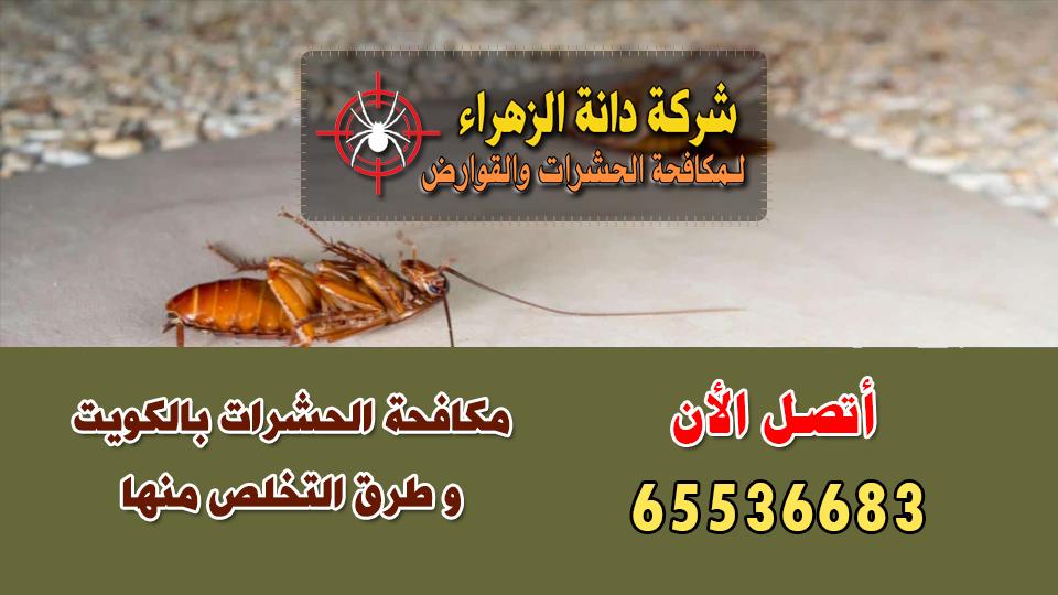 مكافحة الحشرات بالكويت و طرق التخلص منها
