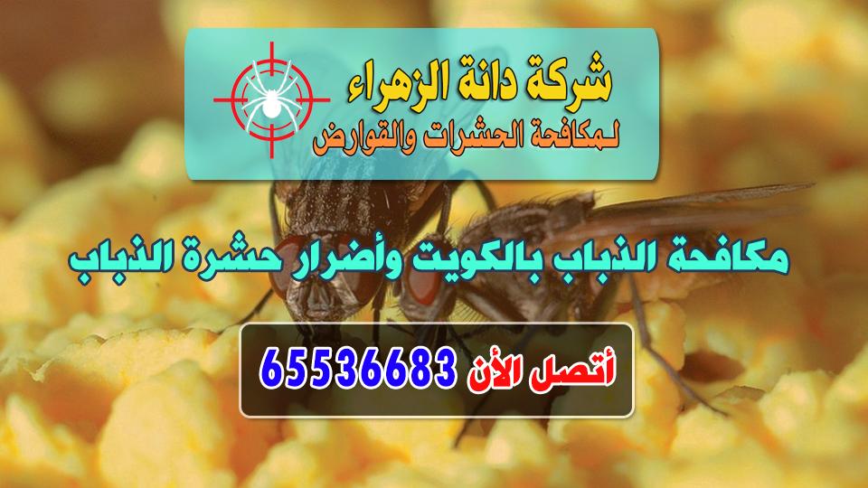 مكافحة الذباب بالكويت وأضرار حشرة الذباب
