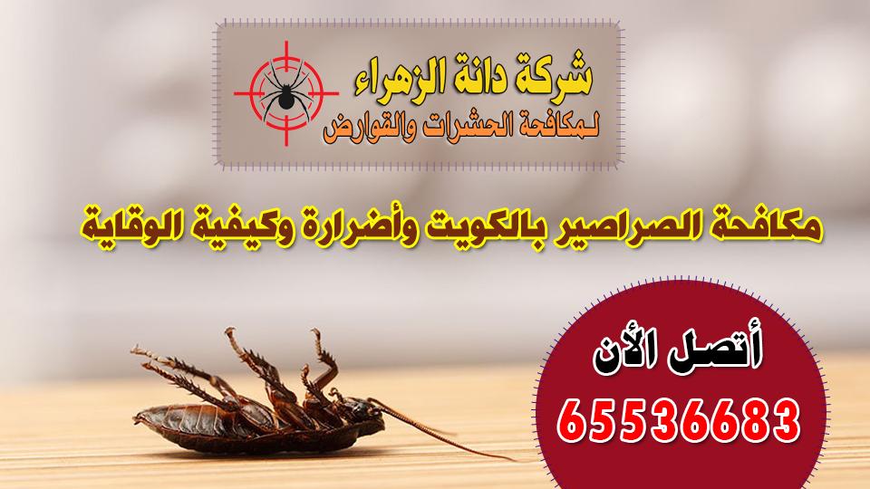 مكافحة الصراصير بالكويت وأضرارة وكيفية الوقاية