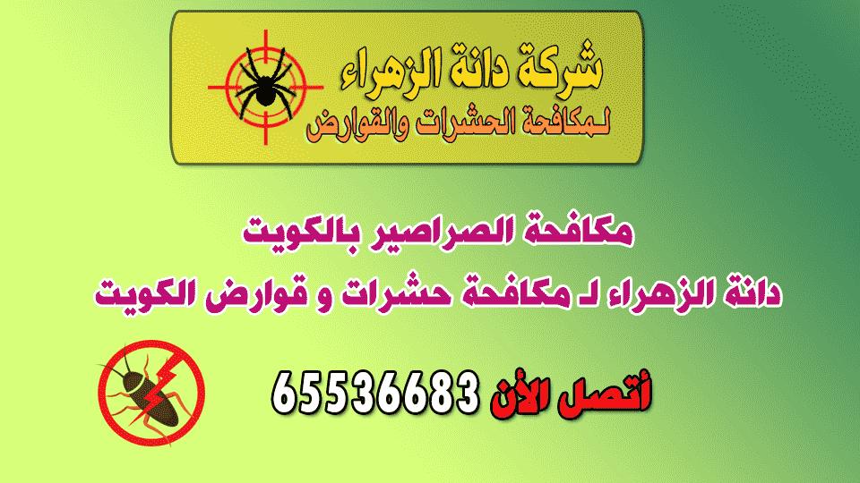 مكافحة الصراصير بالكويت وإبادتها