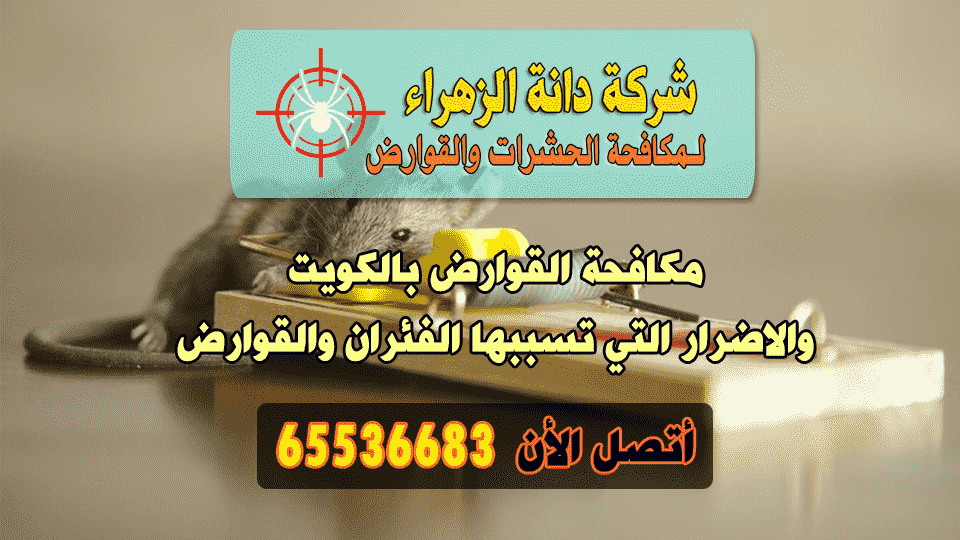 مكافحة القوارض بالكويت والاضرار التي تسببها