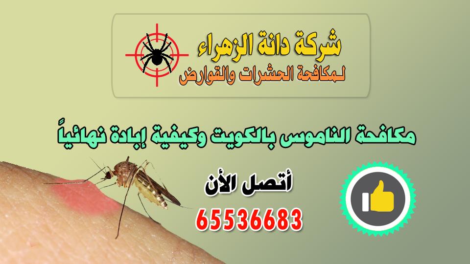 مكافحة الناموس بالكويت وكيفيةإبادة