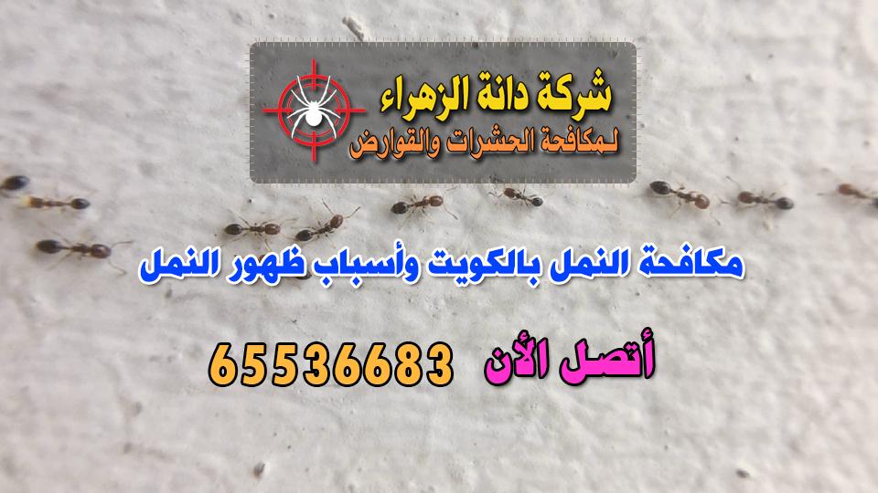 مكافحة النمل بالكويت وأسباب ظهور النمل