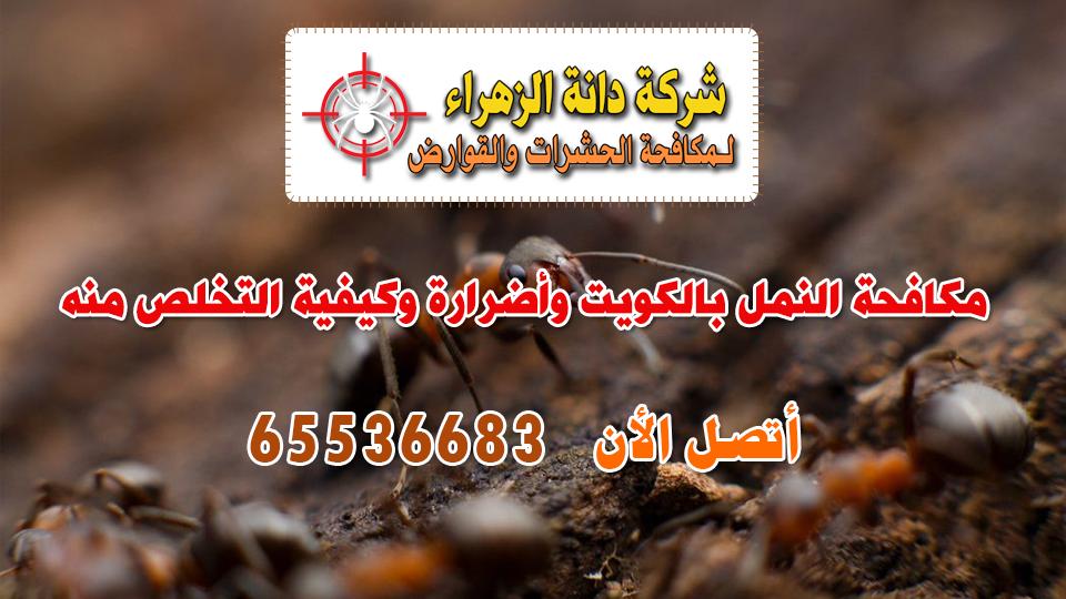 مكافحة النمل بالكويت وأضرارة وكيفية التخلص منه