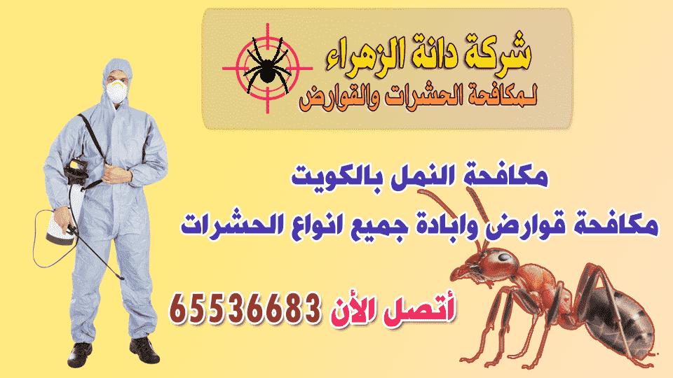 مكافحة النمل بالكويت