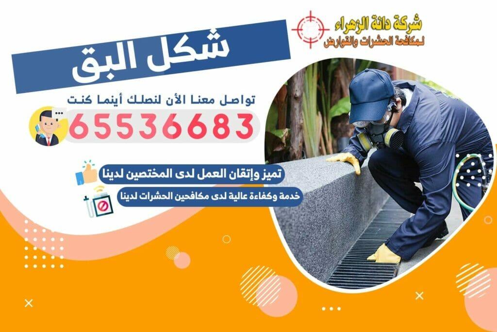شكل البق | شركة دانة الزهراء لمكافحة الحشرات بالكويت