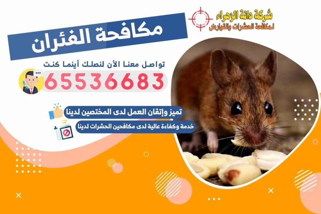مكافحة الفئران | شركة دانة الزهراء لمكافحة الحشرات والقوارض بالكويت
